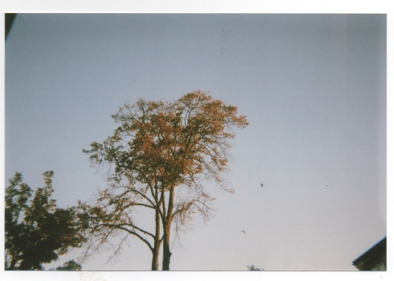 Trees in south